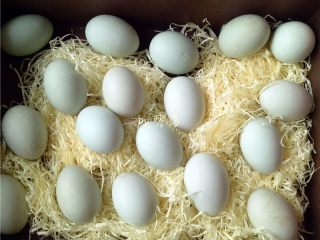 自制咸鸭蛋,将鸭蛋用牙刷轻轻刷洗干净,放在阳光下晾晒干水分;用阳光晒一晒,咸鸭蛋容易出油;但千万别暴晒,阳光照射时间不易过长,会坏掉;