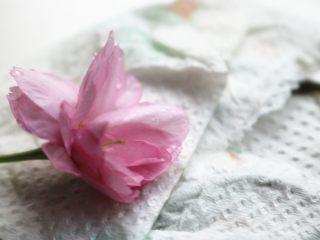 樱花草莓慕斯,樱花洗净吸干水分,主要是用来装饰,最后并没有吃,其实是可以食用的。