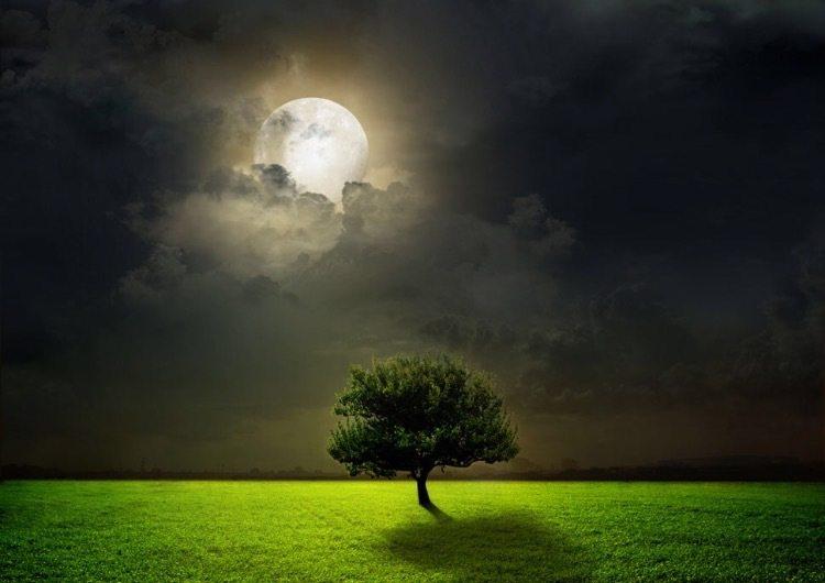 我的独家记忆——中秋夜的月饼