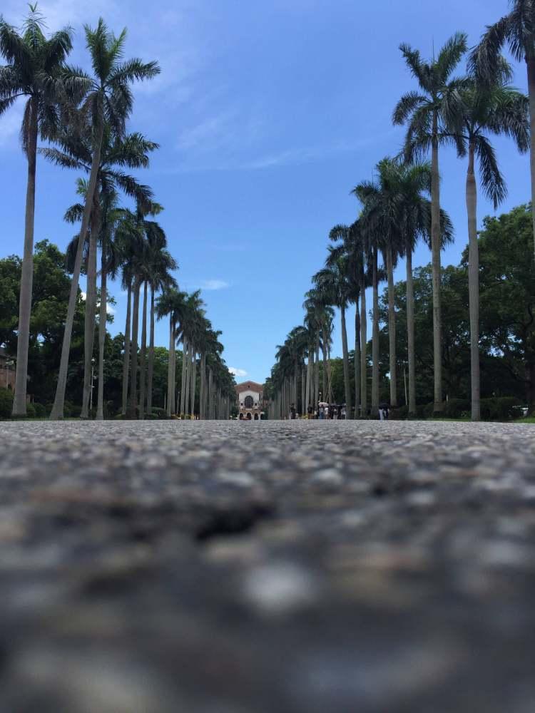 台北 - 我的夏季胖五斤之旅