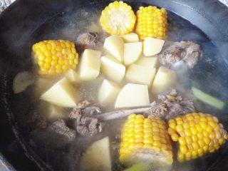 秋季滋补靓汤——玉米羊肉汤,再次开锅后,加入土豆,