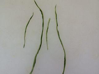 餐盘画——立春,用剪刀剪出柳丝的形状