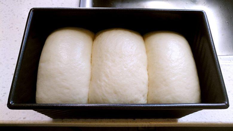 中种北海道吐司,放入烤箱发酵至8分满