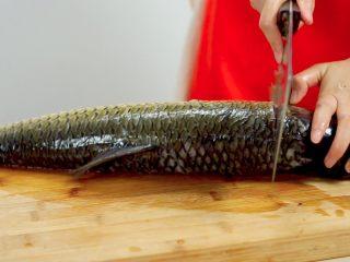 荆楚大地,吃鱼不见鱼——鲜美鱼糕,先将草鱼的鱼肉剔下来,在鱼头下方划上一刀,划至骨头处,不要切断