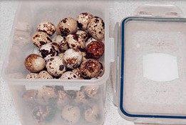 虎皮鹌鹑蛋红烧肉,把煮熟鹌鹑蛋装进密封盒里,加少许清水,盖上盖,上下左右摇晃盒子