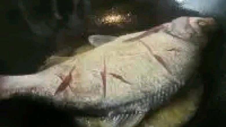红烧鳊鱼,鱼下锅前,先用纸巾把鱼背擦干,避免鱼皮粘锅,放入鳊鱼,煎至一面金黄