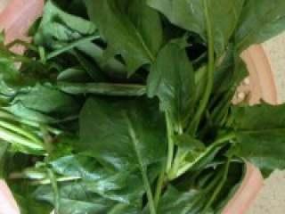 猪干菠菜汤,准备好的菠菜洗干净,拧段。