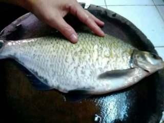 清蒸鳊鱼,把鱼杀了去掉身上的鱼菱片。