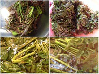 凉拌椿菜,如图刚刚上山去摘的椿菜,水烧开冷几分钟在放椿菜进去汤(注意;烫的时间不能长,相当于过过水就可以了)