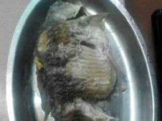 鲫鱼金针菇豆腐汤【两吃】,滚好的鱼捞起装盘