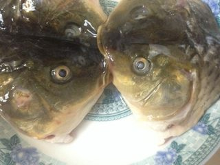 剁椒鱼头,腌制好的鱼头用清水洗干净,擦干水份,放入碗中